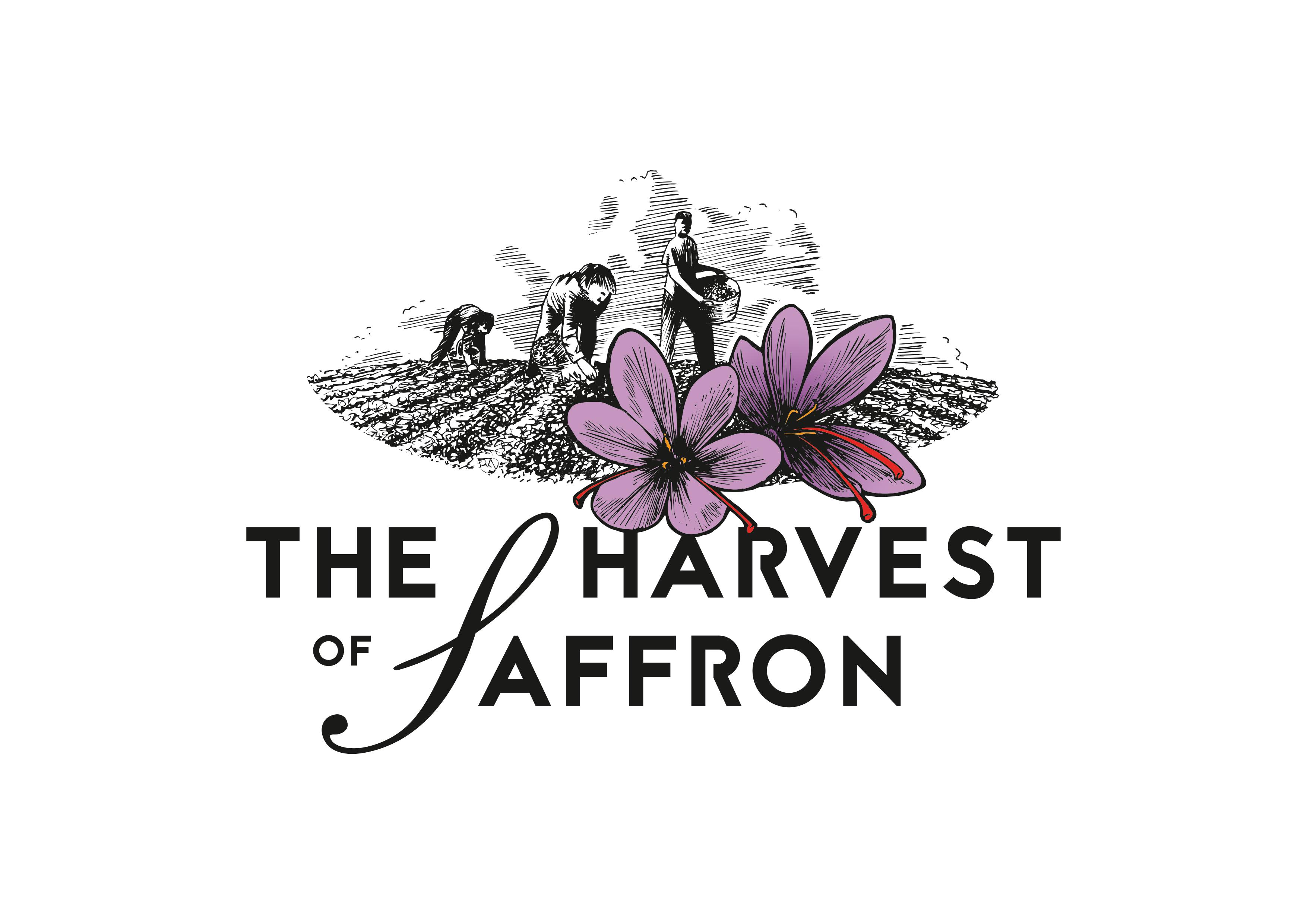 Harvest of Saffron